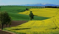Midi-Pyrnes - paysage du Lauragais (AlCapitol) Tags: midipyrnes lauragais nikon d800 pyrnes montagne mountain printemps spring landscape
