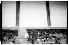Acros100-2-34 (splendid future) Tags: kyoto yenlifefilm film filmphotography    filmlover nikon f3 fujifilm acros100
