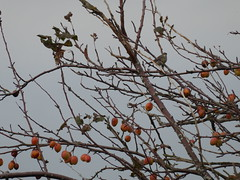Yellow-rumped Warbler (misiekmintus) Tags: vancouver bc britishcolumbia canada birds birding bird birdwatching pacificnorthwest nature natur naturaleza northwest boundarybay delta yellowrumpedwarbler setophagacoronata