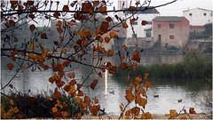 Otoo enmarcado (Ana_Lobo) Tags: otoo niebla ro duero zamora patos hojas rboles reflejos aceas pinilla castillaylen canon eos 450d ramas