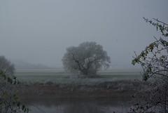 Lieblingsbaum (ute_hartmann) Tags: baum tree weser weserbergland nebel