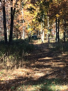 Kentucky Whitetail Hunt 7