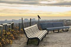 Bird on the lookout (Cor de Hamer (www.cordehamer.nl)) Tags: bird dunes denhaag kijkduin northsea noordzee duinen