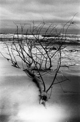 (bettsdg) Tags: blackandwhite blackwhite monochrome romania 35mm olympus om10 400asa kodaktmax tree sea sky landscape marine beach seaside danube delta nature
