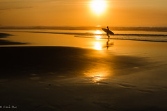 sunset ({mamisurfer}) Tags: sunset sun beach summer surf silueta