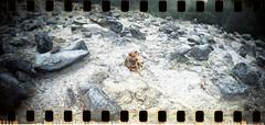 njing! (vinskatania) Tags: colornegative bandunganalog colornegative800 cn800 lomo film filmphotography tangkubanperahu lomographysprocketrocket sprocketrocket