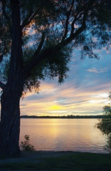 waiting (thomas.erskine) Tags: 20160909imgp1963teelevrot 2016 sep fall sunset ottawa river silhouette tree