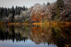1479660107177 (qaxwkhlm1) Tags: weiher colors nature lake frozen autumn trees