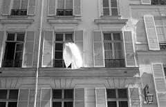 Wind (Amelien (Fr)) Tags: 147 100 28 2016 50mm ant analog argentique believeinfilm capturedonrealfilm dilutione elmar epson film fuji fujifilm hc110 leica m3 neopan pellicule blackandwhite bw filmisnotdead homescanned monochrome nb noiretblanc v550