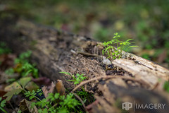 Rotting Log (AP Imagery) Tags: log moss rotted decay growth nature green weeds groundcover kentucky usa