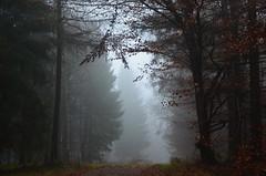 DSC_5335 Eine mystische Atmosphre... - A mystical atmosphere ... (baerli08ww) Tags: deutschland germany rheinlandpfalz rhinelandpalatinate westerwald westerforest wald forest nebel fog mist mystisch mystic mysterious natur nikon