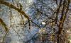 Autumn Reflections (Wes Iversen) Tags: clichesaturday grandblanc grandblanccommons hcs michigan nikkor24120mm branches leaves nature reflections streams trees