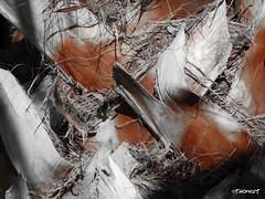 Palme (TitusT1960) Tags: natural nature natur browncolor brown color 25faves kreuzmuster makro nikonp7100 p7100 nikon selektivefarbe selektiv bw abstrakt braun farbe palme