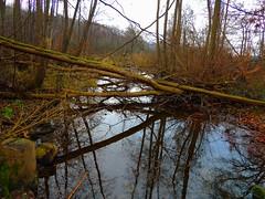 """Dezemberstimmung (Sophia-Fatima) Tags: boissow mecklenburgvorpommern deutschland naturschutzgebietboissowersee boissowersee kanal canal winter """"nikonflickraward"""""""
