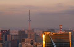 Twilight's Sky Tree (sapphire_rouge) Tags:      tokyotower roppongihills japan skyscraper roppongi twilight skytrees  darkness