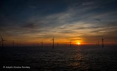 The day ends (Askjell's Photo) Tags: belgium blighbank northsea scenery sunset volantis windturbine windmill windpower askjell
