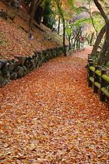 DSC02796 (MrSUIZOU) Tags: 京都 紅葉 北野天満宮 平野神社 十月桜