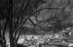 exakta_vx_kodak_triX_400_haifa_fire_26_nov_2016_019 (avitalnatanson) Tags: exakta fire damage kodak trix arson terror haifa carmel