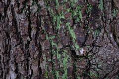Rima Dadenji, moss and wood cartography, 2016 (Rima Dadenji) Tags: moss tree trees forest woods agroforestry forestry permaculture nature green fuji fujifilm fujifilmxt10 environment rimadadenji ecology