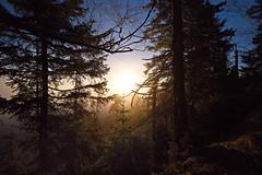 cold'n'warm (tobias-eger) Tags: schwarzwald herbst sonne sonnenaufgang wald golden tree blackforest sun forest sunrise nature autumn canon
