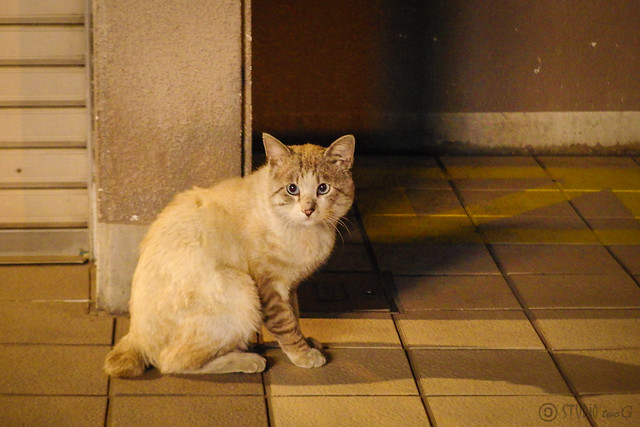 Today's Cat@2014-04-16