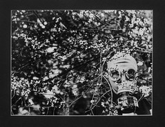 The Way Things Were (Shanna Roast) Tags: flowers tree film oregon way lens photography scary eli sad mask state photographers things gas osu 400 cannon horror were lonely macabre benjamin 18 crisis 200mm preiss