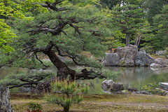 12_Kyoto Temple Gardens-Japan-Series1-27frames_DSF2675 (Serge THELLIER) Tags: kyoto osaka avril japon 2014 sergethellier fujifilmxt1