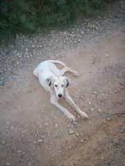 friendly (ignaz906) Tags: dog pet pets white eye dogs face eyes friend friendly