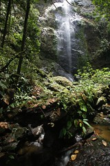 Waterfall (CIFOR) Tags: water waterfall asia malaysia forests verticals danumvalley cifor