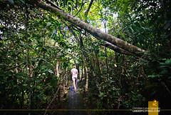 Philippine Tarsier Sanctuary (Lakad Pilipinas) Tags: forest asia philippines bohol sanctuary tarsier 2014 corella centralvisayas lakadpilipinas christianlsangoyo philippinetarsiersanctuary