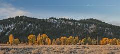 Grand Teton National Park (Albert Photo) Tags: sky usa house mountains tree woods moose wyoming grandtetonnationalpark