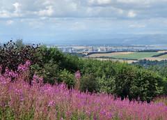 140808 Forth Valley - Grangemouth. (ScotiaIsles) Tags: forth grangemouth petrochemical rosebaywillowherb cumuluscongestus ineos cumulushumilis