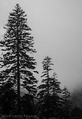 Great Smoky Mountains national Park (lezlievachon) Tags: