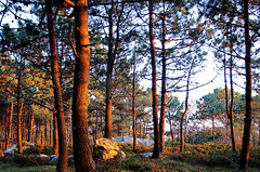 Sunset (Uvep3) Tags: sunset forest atardecer woods galicia bosque puestadesol