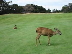Crystal Springs Golf Course (CoachCashMoney) Tags: andy golf kevin crystal brandon le springs burlingame batangan