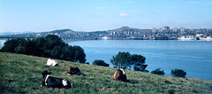 1969 - Music City - Dundee, sunny side of the Tay. (ScotiaIsles) Tags: 1969 dundee stones beatles rocknroll snowpatrol theview the60s idlewild sidlaws awb roddywoomble auchterhouse rickyross cairdhall averagewhiteband colinsteele deaconblue ackerbilk garyclark tommysteele chasingcars billymackenzie postbop theassociates samejeans tubbyhayes delshannon pickupthepieces dannywilson dougievipond kennyball marysprayer showyourhand jimmydeuchar jazz625