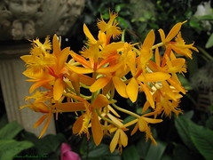 Duke Farms Flower_10378 (smack53) Tags: flowers summer plants nature canon newjersey orchids blossoms powershot summertime naturepreserve hillsborough g12 plantings dukefarms smack53