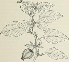 Anglų lietuvių žodynas. Žodis genus physalia reiškia genties physalia lietuviškai.