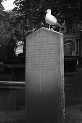 Seagull on tumbstone • Aberdeen (Verino77) Tags: uk2014 aberdeen scotland verino77 vero villa veronica verino verovilla77 canon rebelxs