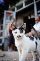 715-Mya-MAWLAM-142.jpg (stefan m. prager) Tags: cat southeastasia burma myanmar katze birma katzen moulmein mieze mawlamyaing mawlamyine sudostasien