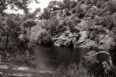009730 - Río Alberche (M.Peinado) Tags: copyright españa río spain bq 2014 comunidaddemadrid ríoalberche bqaquaris50 09082014 agostode2014