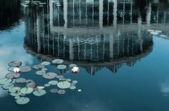 Atlanta Botanical Garden (Scriblerus) Tags: reflection building architecture waterlily greenhouse lilypads lilypad atlantabotanicalgarden