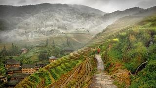 Longji Rice Terraces.  Guangxi Zhuang Autonomous Region, China