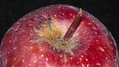Nice juicy apple from Bigbasket.com... (Mike Prince) Tags: india apple bangalore worm karnataka foodanddrink bengaluru fruitandvegetables insectsandspiders frazertown cultureandcommunities