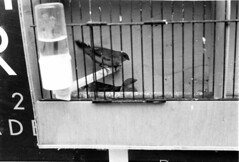 Negative (35) (Joey Scannell) Tags: street old city friends urban bw detail cute bird art film project joseph mine market group young meeting cage gritty sharp casual tradition ilford scannell