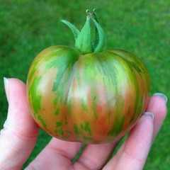"Heirloom tomatoes just don't come any more beautiful than this!  #tomato #heirloom #garden • <a style=""font-size:0.8em;"" href=""https://www.flickr.com/photos/54958436@N05/14945956060/"" target=""_blank"">View on Flickr</a>"