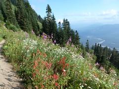 No end of color (edenseekr) Tags: wildflowers mountians skagitvalley saukmtnwa
