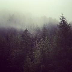 /\/\/\/\ (Peter Keyngnaert (pkeyn)) Tags: trees mountain mountains tree berg austria oostenrijk bomen boom bergen spar peterk iphone sparren kals artlibre kalsamgrosglockner pkeyn peterkeyngnaert keyngnaert iphone5s