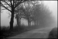 December in fog (elkarrde) Tags: road morning trees sun tree film nature fog landscape blackwhite pentax takumar kodak path foggy croatia spotmatic t400cn 135mm asahipentax 125asa c41 chromogenic supermulticoatedtakumar colornegative pullprocess camera:brand=pentax camera:type=slr film:brand=kodak supermulticoatedtakumar135135 film:format=135 kodakprofessionalt400cn lens:focallength=135mm location:country=croatia spotmaticspf film:process=c41 film:speed=400 lens:brand=asahipentax desinec honeywellpentaxspotmaticspf lens:brand=takumar camera:mount=m42 lens:maxaperture=35 camera:model=spotmaticspf film:model=t400cn lens:brand=pentax camera:year=1971 film:expiry=expired camera:brand=honeywellpentax camera:format=135 lens:format=135 film:ei=125 lens:brand=supermulticoatedtakumar