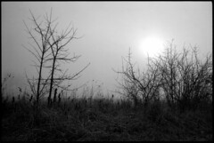 December in fog (elkarrde) Tags: road morning trees sun tree film nature fog landscape blackwhite pentax takumar kodak path 28mm foggy croatia spotmatic t400cn asahipentax 125asa c41 chromogenic supermulticoatedtakumar colornegative pullprocess camera:brand=pentax camera:type=slr film:brand=kodak film:format=135 kodakprofessionalt400cn location:country=croatia spotmaticspf supermulticoatedtakumar13528 film:process=c41 lens:focallength=28mm film:speed=400 lens:brand=asahipentax desinec honeywellpentaxspotmaticspf lens:brand=takumar camera:mount=m42 lens:maxaperture=35 camera:model=spotmaticspf film:model=t400cn lens:brand=pentax camera:year=1971 film:expiry=expired lens:model=13528 camera:brand=honeywellpentax camera:format=135 lens:format=135 film:ei=125 lens:brand=supermulticoatedtakumar